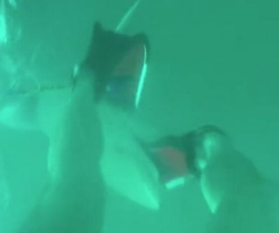 Shark steals flipper from diver's foot off Australian coast