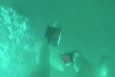Watch:-Shark-steals-flipper-from-diver's-foot-off-Australian-coast