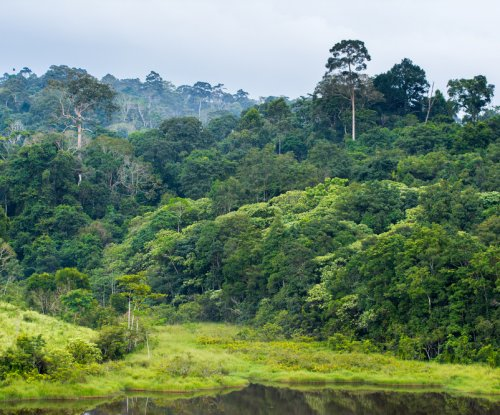 Carbon emissions increase along the forest edge, modeling study reveals