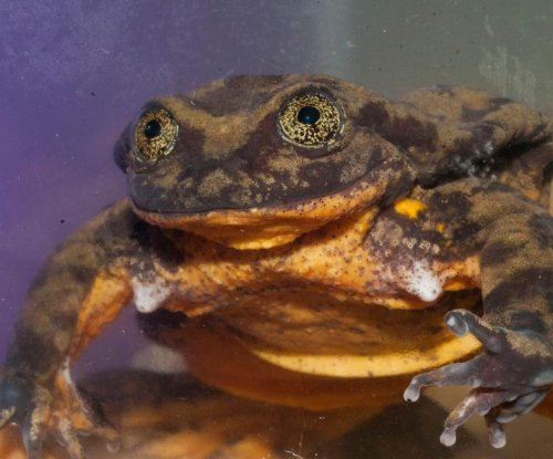 Endangered Bolivian frog gets dating profile just in time for Valentine's Day