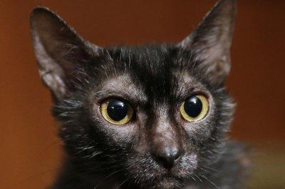 New York lawmakers ban cat declawing