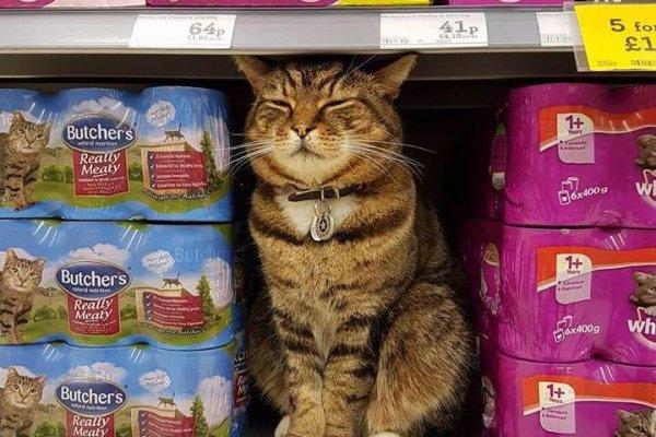 Cat Food Morrisons Supermarket
