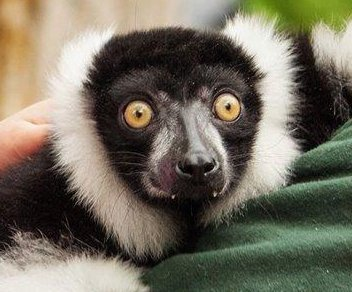 Zoo pleads for return of stolen monkey, lemur and tortoise
