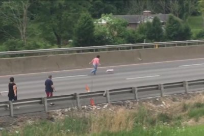 Pig leads pursuers on foot chase across lanes of West Virginia highway