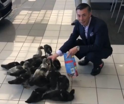 Family of ducks find home at Orlando car dealership
