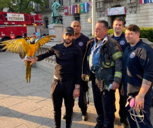 Runaway parrot rescued from atop New Jersey city hall