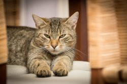 Cats like catnip for the euphoria, and because it repels mosquitoes
