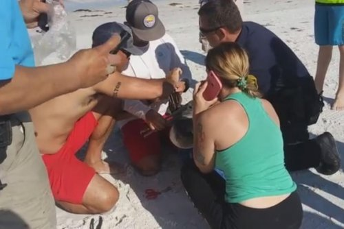Police, lifeguards, bystanders come to rescue of tangled pelican