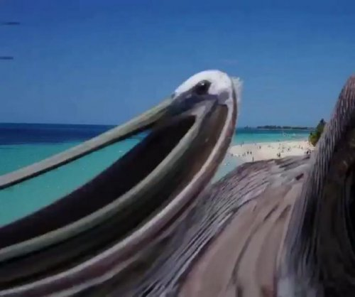 Pelican knocks drone out of the sky at Jamaican beach