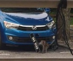 Wild monkey steals license plate from parked car