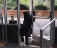 Black bear cubs wander into North Carolina nursing home