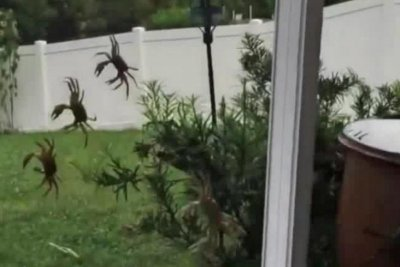 Rains bring crustacean invasion to Florida man's home