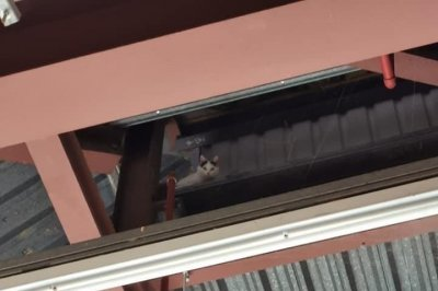 Cat rescued from high ceiling at supermarket