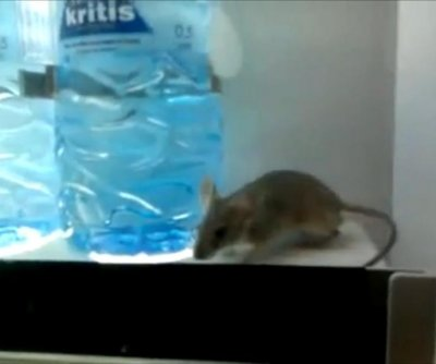 Mouse spotted inside water vending machine at Cyprus hospital