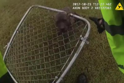 Deputy rescues puppy with head stuck in chain-link fence