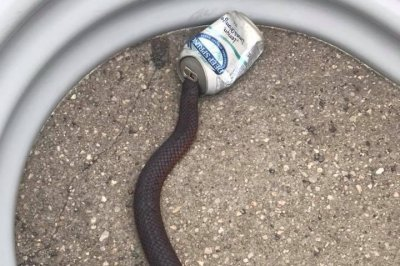 Rescuer saves snake with head stuck in soft drink can