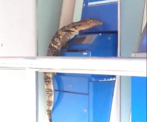 Giant lizard climbs on ATM outside bank