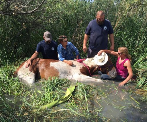 'Cupcake' the horse rescued from Colorado marsh