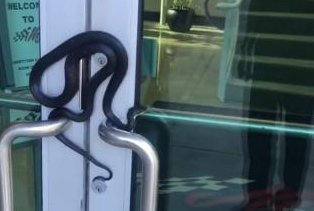 Snake takes over front door to NASCAR team's office