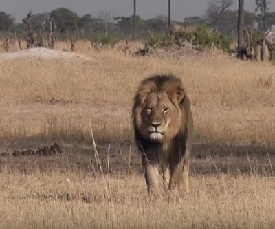 Trial for Cecil the lion hunting guide Bronkhorst delayed
