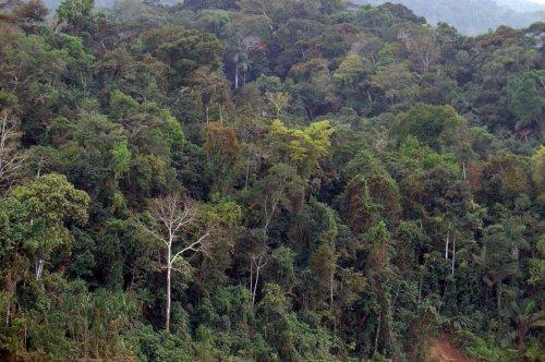 Gold mining with mercury threatens health of communities miles downstream