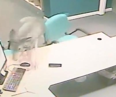 Deer bursts into business, clears shocked worker's desk