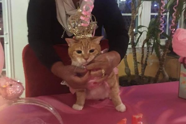 watch  cat turns 15 with traditional quinceanera