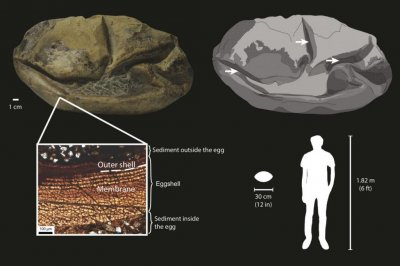 First egg ever found in Antarctica may come from extinct sea lizard