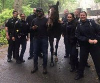 New York police wrangle loose horse wandering Staten Island
