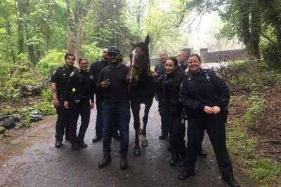 New York police wrangle loose horse wandering Staten Island