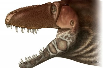 Scientists discover new dinosaur evolved by anagenesis