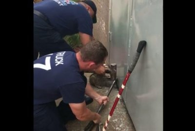 Fire crew rescues cat with head trapped under metal door