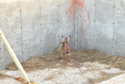 Deer rescued from construction site basement in Wisconsin