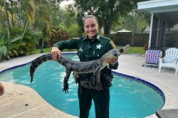 Florida deputy ejects trespassing alligator from backyard pool