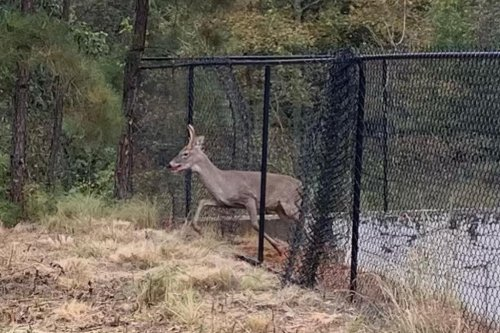 Firefighters free deer from retention pond fence