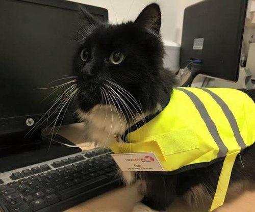 Big purr-motion for cat living at British train station
