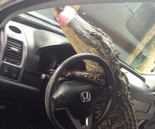 'Driving gator' removed from trapper's dashboard