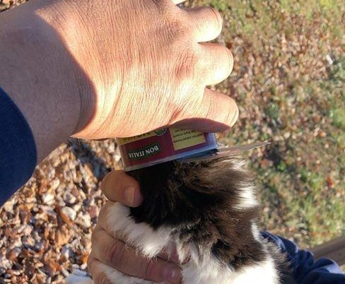 Firefighters rescue cat with head stuck in pasta can