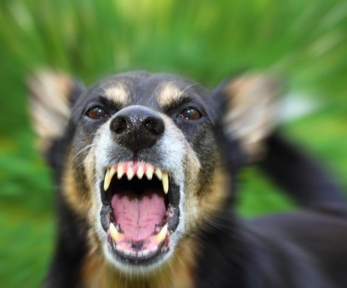 Report: Rabies from dogs kills 160 people a day worldwide