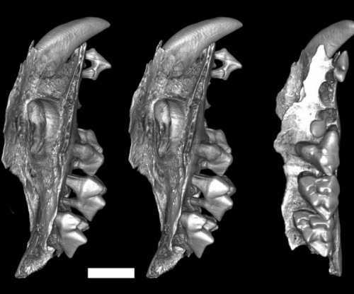 Scientists discover extinct group of snail-eating marsupials in Australia