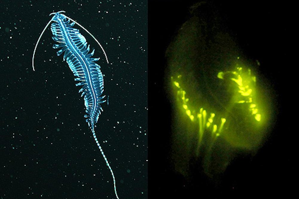Deep Sea Bioluminescence