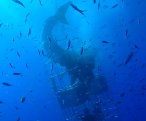 Divers film as great white shark breaks into their underwater cage in Mexico