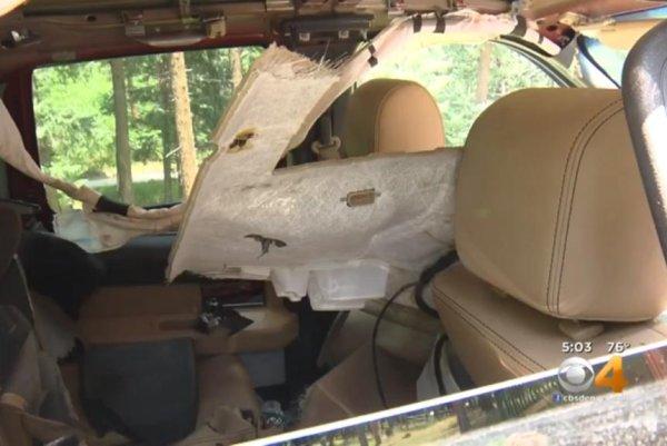 Watch Bear Destroys Truck Interior For Partial Stick Of Gum