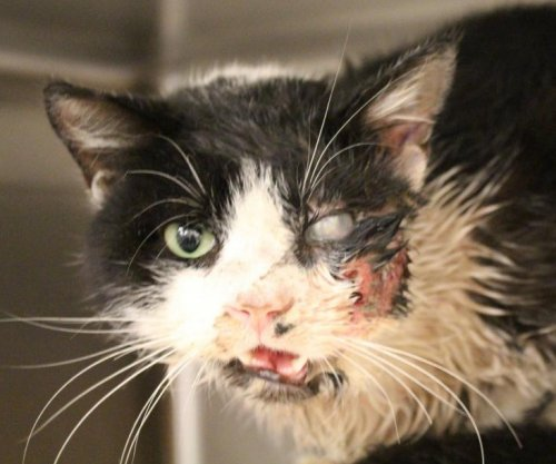 Night of the living cat: Feline found alive five days after being buried