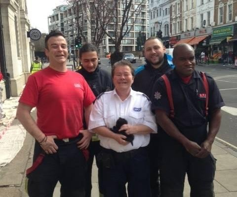 Tiny kitten rescued from van engine in London
