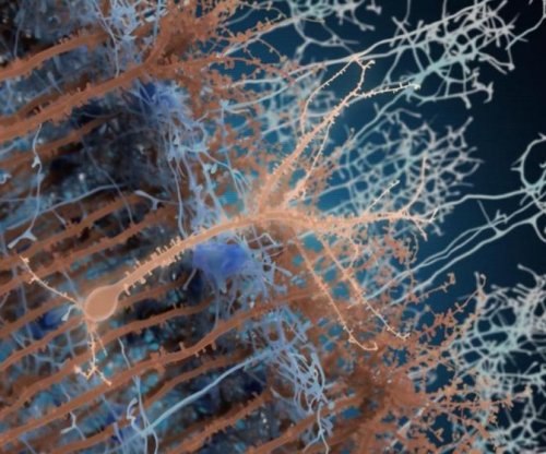 New study highlights neuronal dynamism in adult brain