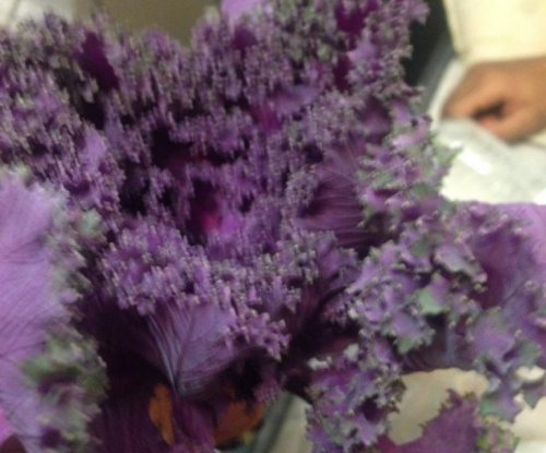 Romantic Houston man mistakes kale bundle for flower