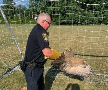 Entangled owl rescued from soccer net in Ohio