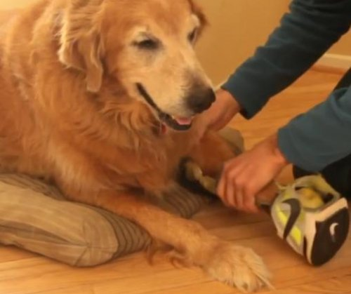Dog owner destroys Nike shoes to create prosthetic paw