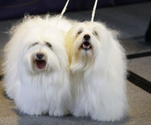 139th Westminster Kennel Club Dog Show to air Feb. 16 & 17